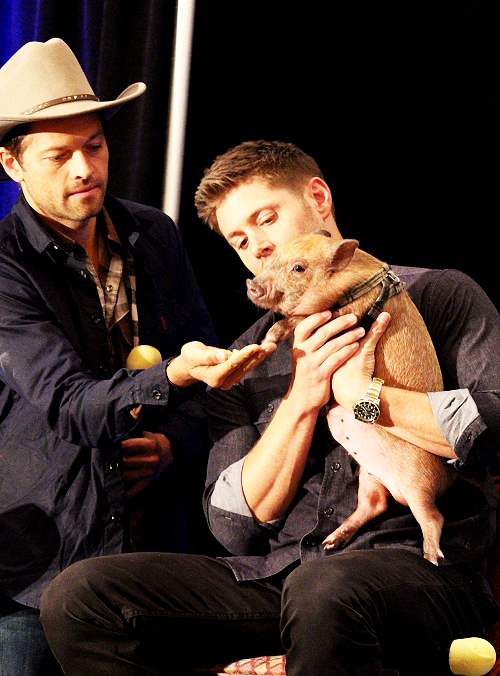 misha collins and jensen ackles with a pig