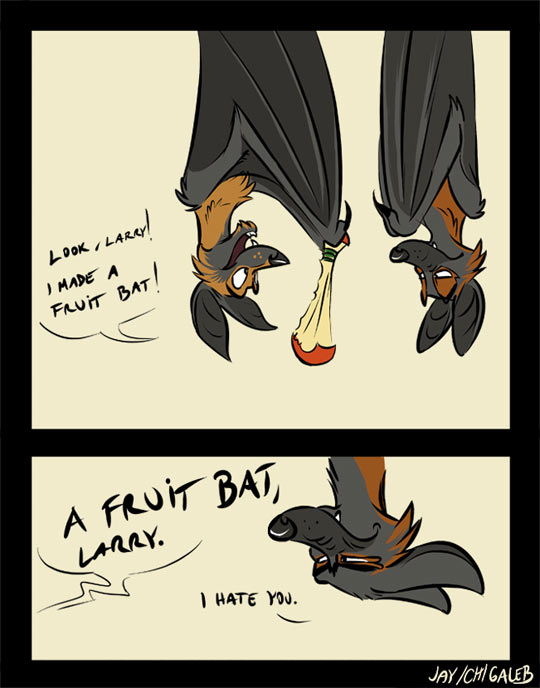 fruit bat's fruit bat